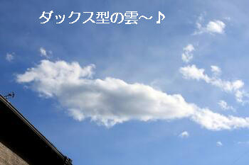 ダックス型の雲.JPG