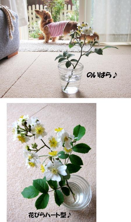 無題12a.jpg