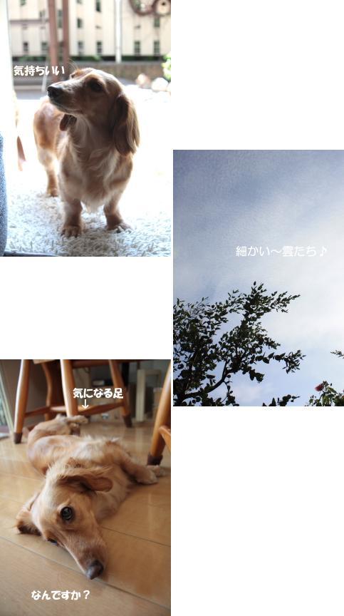 無題6a.jpg