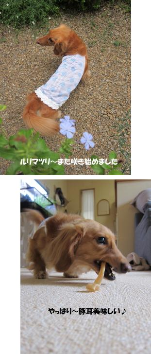 無題7.jpg