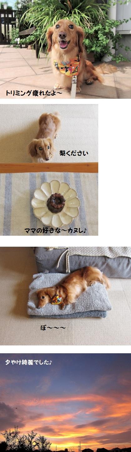 無題5.jpg