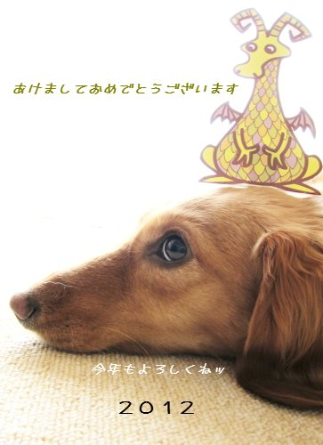 2012せな年賀状.JPG
