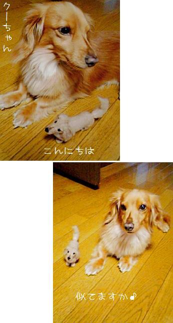 携帯写真クーちゃん.jpg