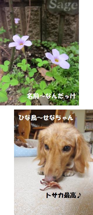 無題22jpg.jpg